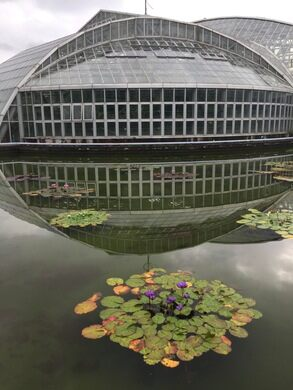 At Nearly 50,000 Square Feet (4,612 Square Meters), The Conservatory Is  Japanu0027s Largest. Caitlinfrunks (Atlas Obscura User)