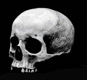 mozart s skull university mozarteum salzburg austria atlas obscura