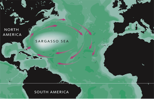 Sargasso Sea On World Map.Sargasso Sea North Atlantic Ocean Atlas Obscura