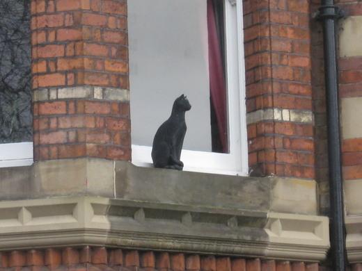 Cat Statues Of York York England Atlas Obscura