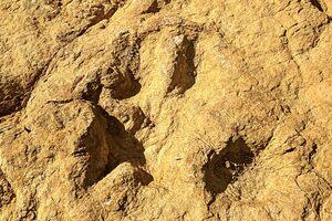 Dinosaur tracks!