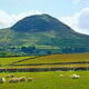 Slemish as seen from Buckna