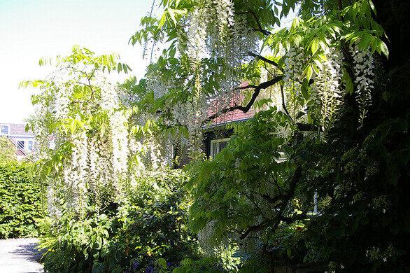 Botanische Tuin Leiden : Hortus botanicus leiden u leiden netherlands atlas obscura
