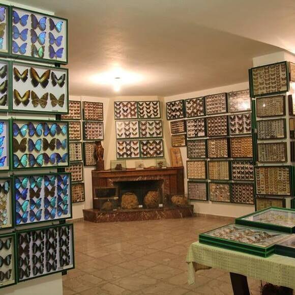Entomological Museum Of Volos Volos Greece Atlas Obscura