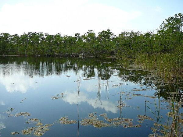 Blue Hole Freshwater Lake Big Pine Key Florida Atlas