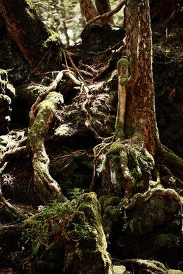 Aokigahara Forest – Fujinomiya-shi, Japan - Atlas Obscura