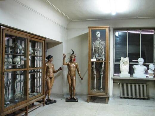 Javier Puerta Museum Of Anatomy Madrid Spain Atlas Obscura