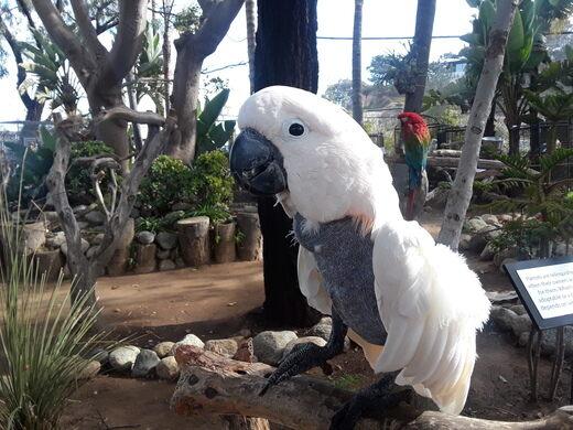 Free Flight Exotic Bird Sanctuary – Del Mar, California