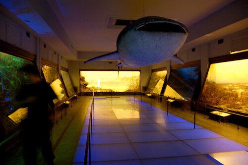 Vanderbilt Museum – Centerport, New York - Atlas Obscura