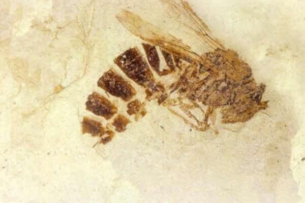 Atlas Obscura's Guide To An Entomologist's Dream Vacation - Atlas