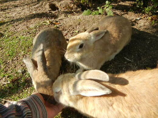 Okunoshima – Takehara, Japan - Atlas Obscura
