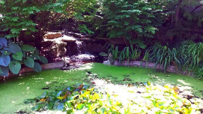 Rodef Shalom Biblical Botanical Garden Pittsburgh Pennsylvania Atlas Obscura