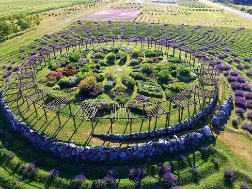 Cherry Point Farm and Market Lavender Labyrinth