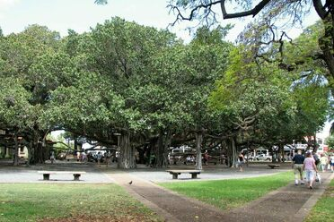 Great Banyan Tree – Howrah, India - Atlas Obscura