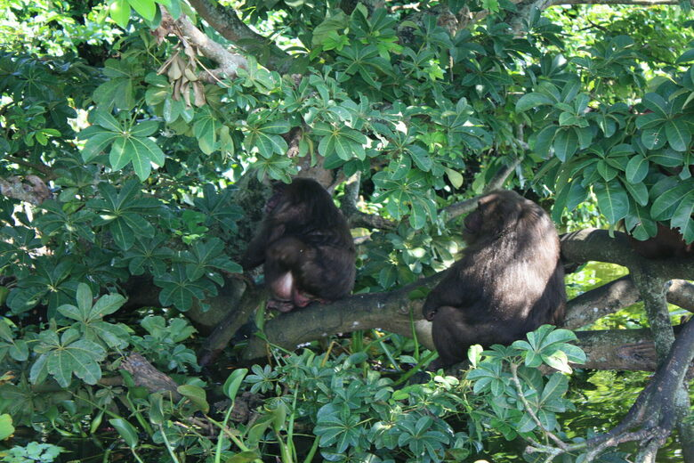 Macaques of Tanaxpillo Island