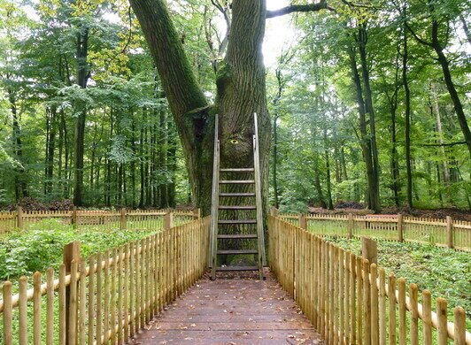 Image result for the bridegroom's tree