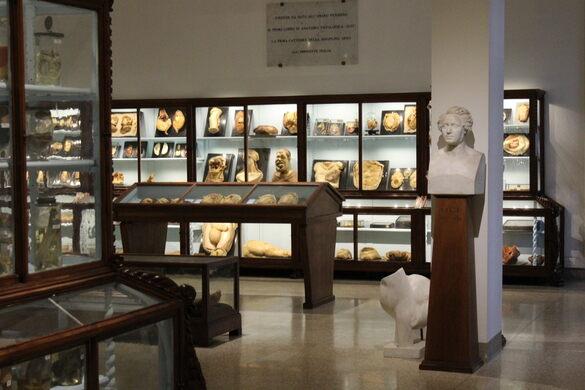 University Of Florence Museum Of Pathological Anatomy Florence