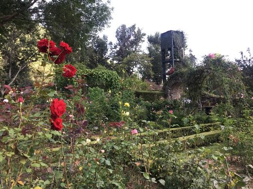 Atitlan Antique Rose Garden Panajachel Guatemala Atlas Obscura