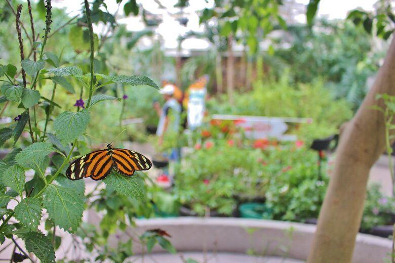 Mariposario Chapultepec (Chapultepec Butterfly Garden)