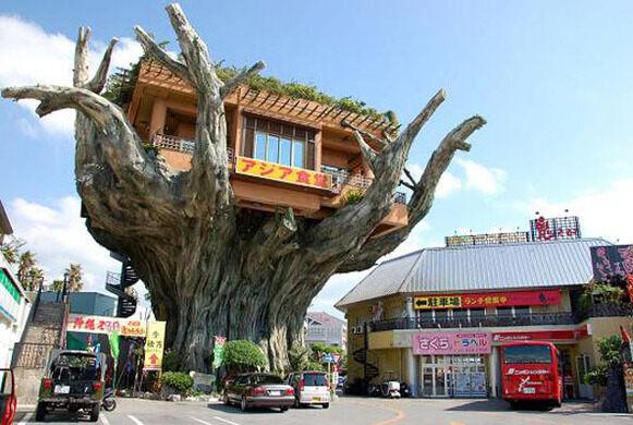 Okinawa Ağaç Restoranı ile ilgili görsel sonucu