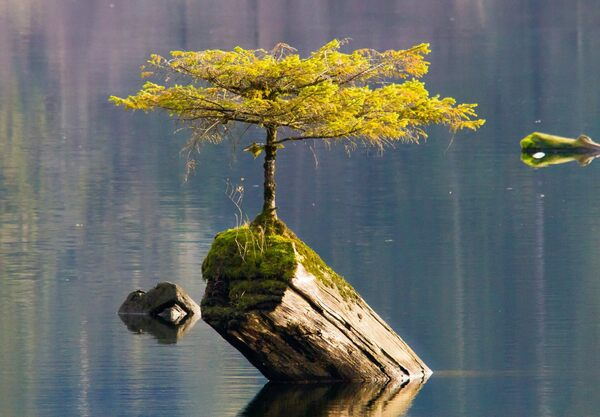 The Tree on the Lake