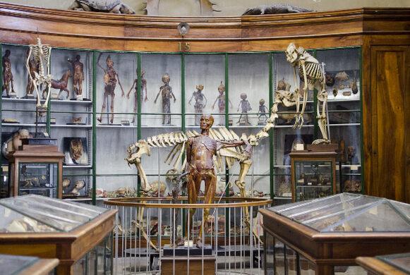 Musée d'Anatomie de Montpellier – Montpellier, France - Atlas Obscura