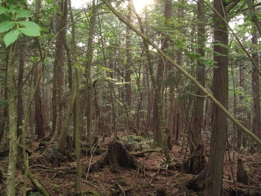 Aokigahara Suicide Forest Narusawamura Japan Atlas Obscura