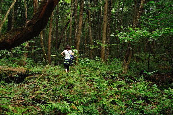 غابه الانتحار ( أوكيغارهارا ) فى اليابان