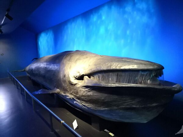 Taxidermy Whale of Fribourg in Fribourg, Switzerland