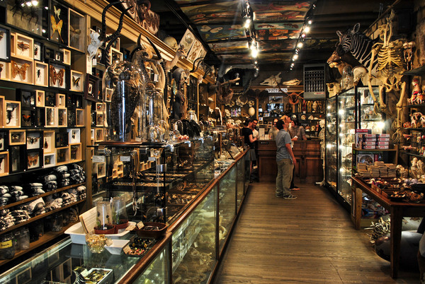 Evolution nature store new york new york atlas obscura for New york special things to do