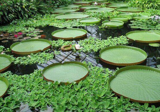 The royal botanic gardens of edinburgh edinburgh for Jardin botanico edimburgo
