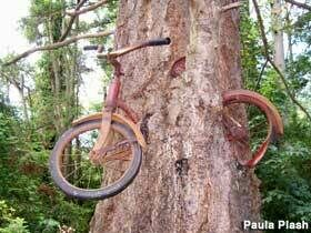 Vashon Island Bike Tree Vashon Washington Atlas Obscura