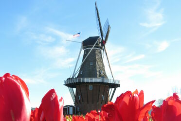 Cool and Unusual Things to Do in Holland - Atlas Obscura