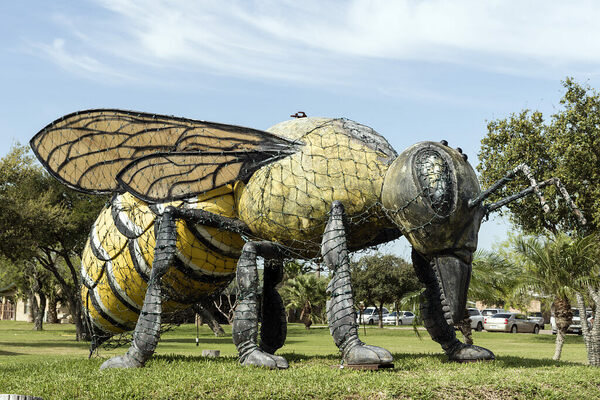 'World's Largest Killer Bee' – Hidalgo, Texas - Atlas Obscura Biggest Insect In The World