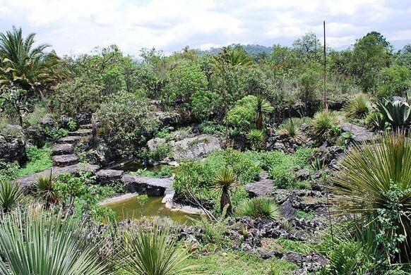 UNAM Botanical Garden – Mexico City, Mexico - Atlas Obscura
