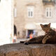 A cat in the Old Town of Kotor.
