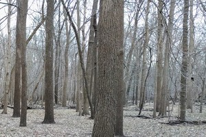 Wooded area of Sans Souci Island