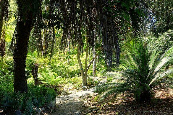 Mildred E Mathias Botanical Garden Los Angeles California