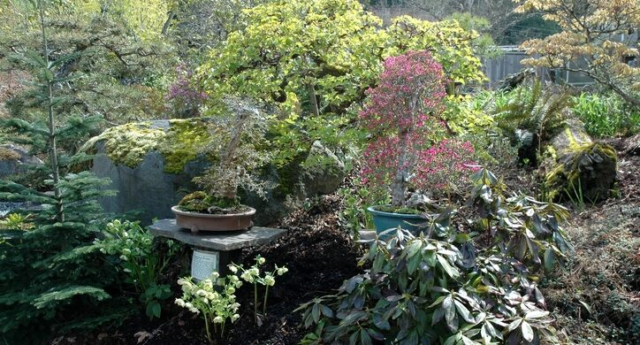 bonsai gardens. arranged bonsai trees elandan gardens (used with permission) p