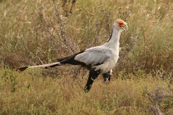 African Bird Of Prey Sanctuary Indlovu DC South Africa
