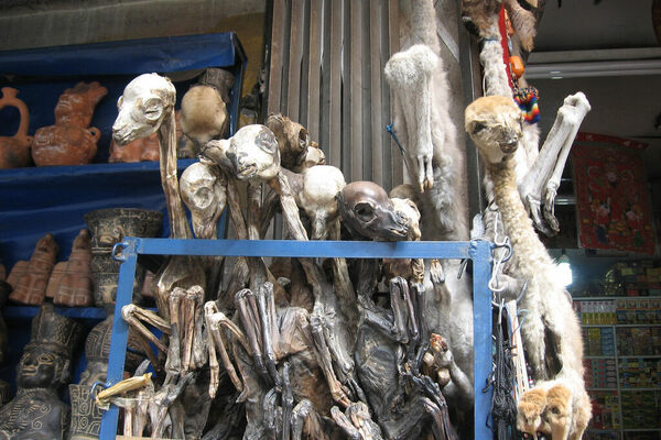 Shopping for Spells: Exploring Four of the World's Witchcraft