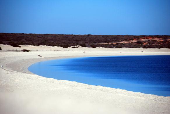 Image result for shell beach shark bay australia