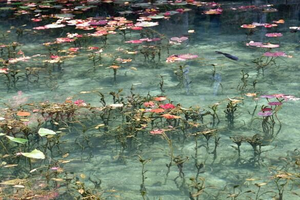 Monet 39 s pond seki shi japan atlas obscura for Koi pond quezon city