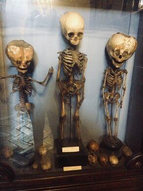 Museo Storico Nazionale Dell' Arte Sanitaria