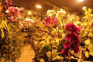Bird's Botanicals