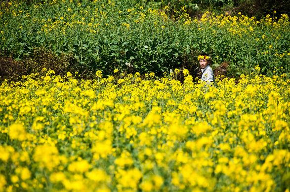 Canola flower fields qujing china atlas obscura view all photos mightylinksfo