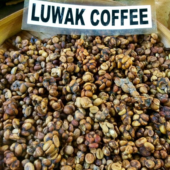 "Civets (also called ""luwaks"") ferment coffee fruit seeds in their digestive tracts before excreting them."