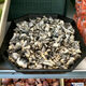 Harvested huitlacoche for sale in a Oaxacan supermarket.