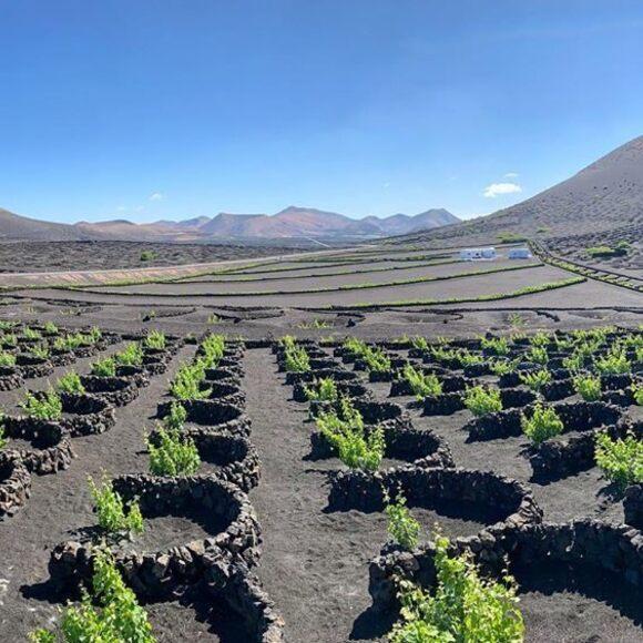 Lanzarote Wines Gastro Obscura