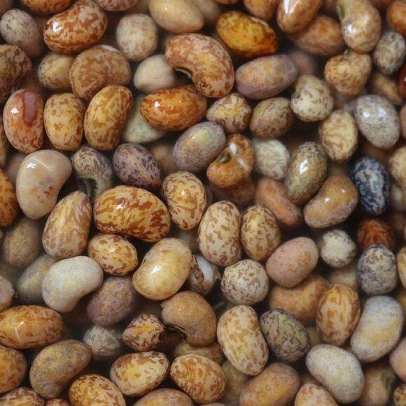 Kapeshuna Beans